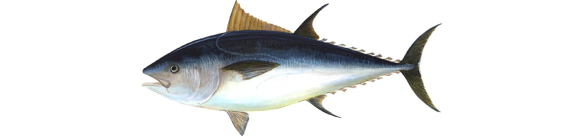 Gastronomia L'Ametlla de Mar