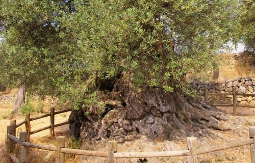 Lo Parot - Horta de Sant Joan