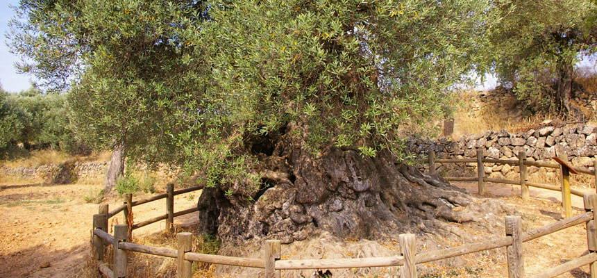 Lo parot terres de l 39 ebre for Piscinas naturales horta de sant joan