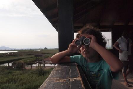 Observació d'ocells amb nens